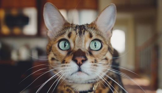 猫用コンビネーションサークル届きました