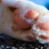 猫ちゃんの必需品爪とぎカリカリーナが気になる