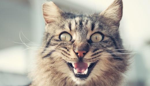 飼い猫ちゃんの仲が急に悪くなる