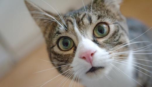 飼い猫のための地震対策
