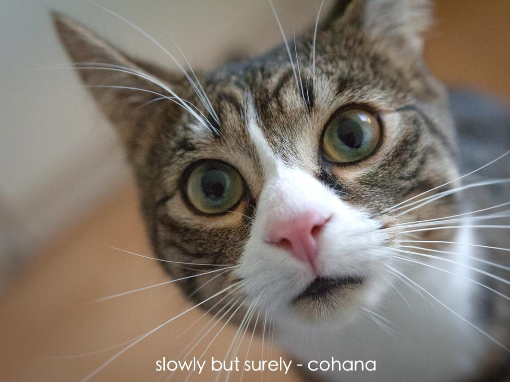猫 地震 対策